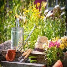 Cuidando do jardim