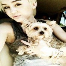Morre o cachorro de Miley Cyrus
