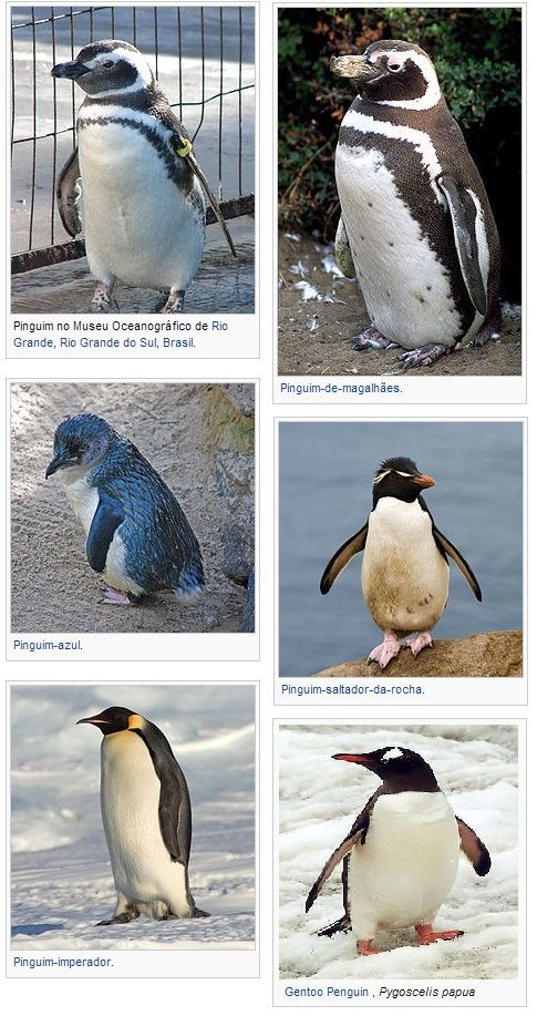 espécies de pinguins